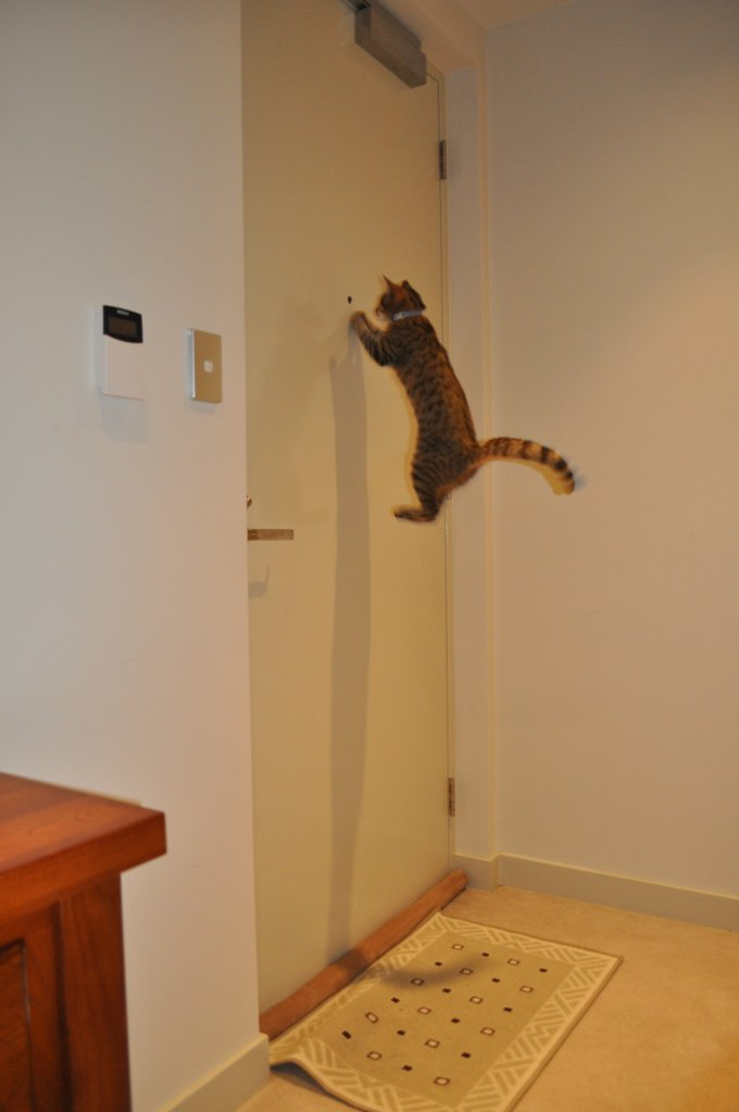 Who's at the door hover cat?